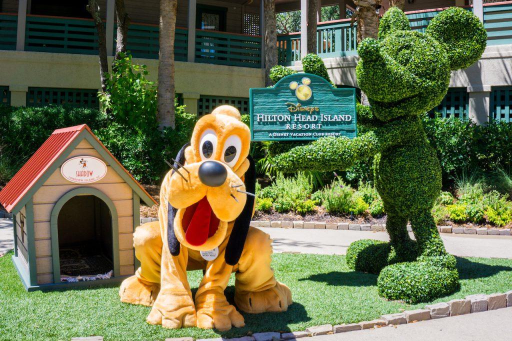 Pluto at Disney's Hilton Head Resort