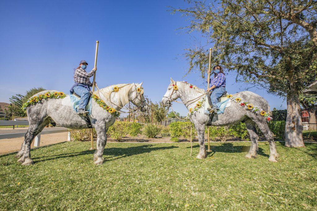 Halloween Horses Strike a Pose at Circle D Ranch